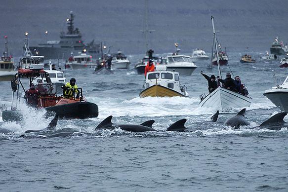 whalehunt1