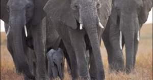 ElephantExtinction070614